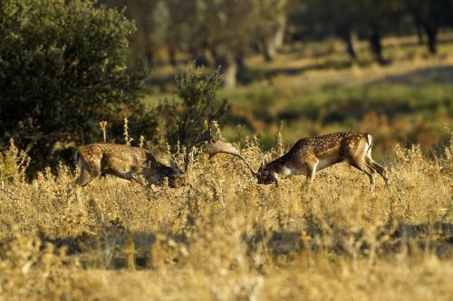 Berrea Viñuelas 05102011 157