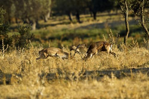 Berrea Viñuelas 05102011 166